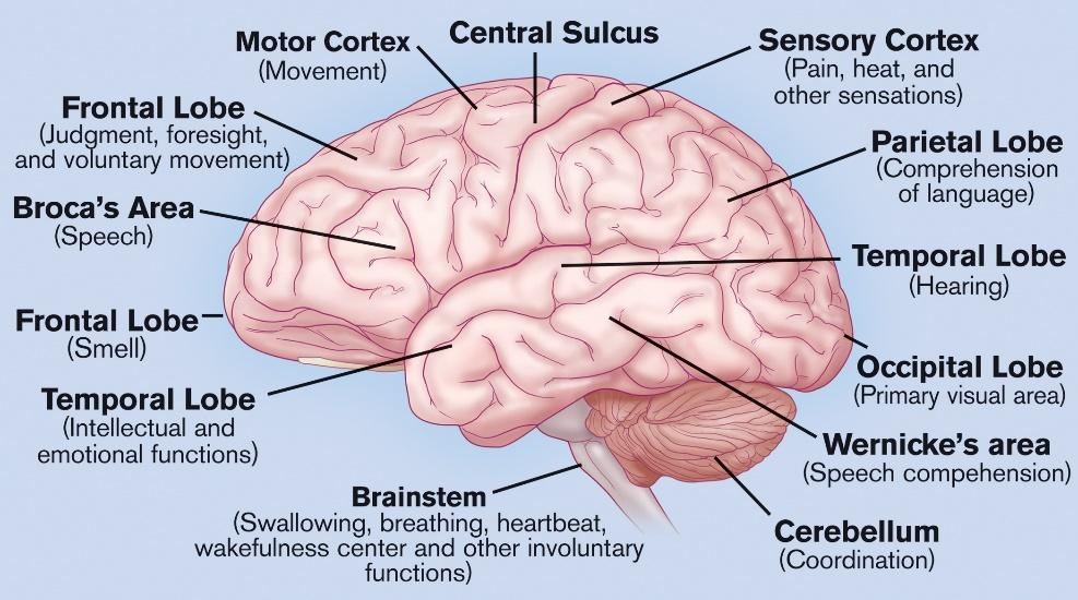 brain and all sectors